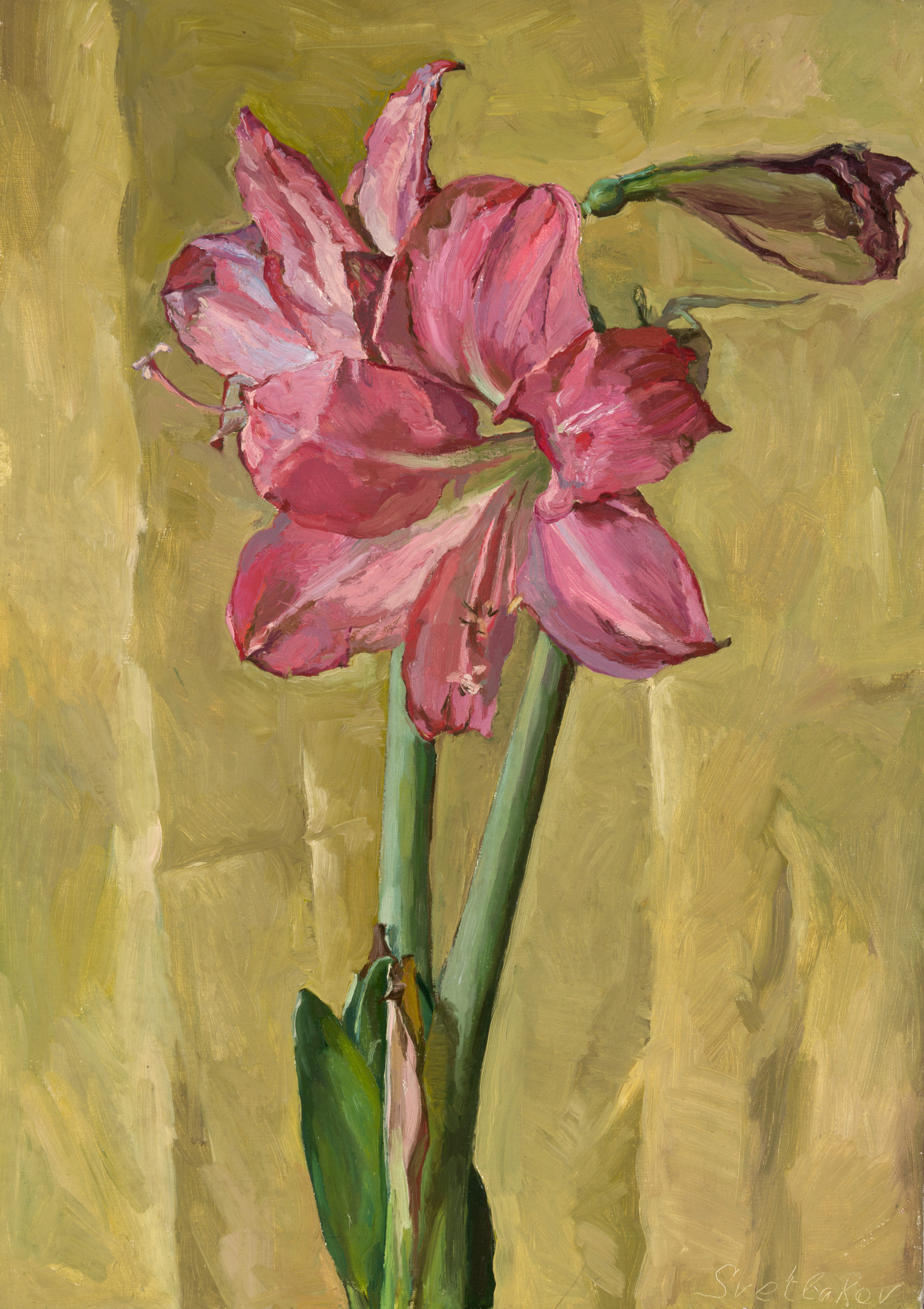 Pink Amaryllis: oil on canvas, 51x35 cm.