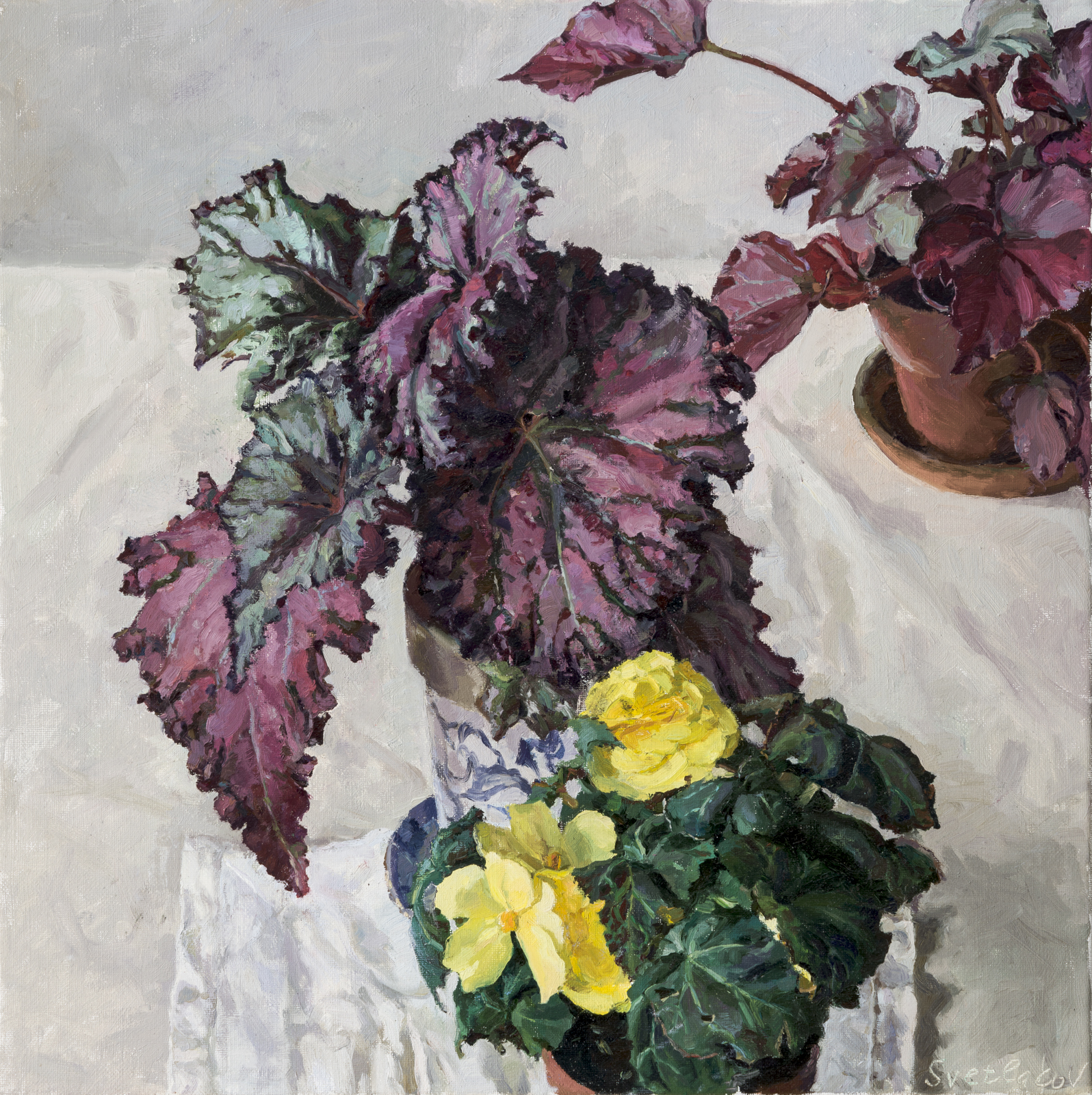 Blossoming Begonia: oil on canvas, 55x55 cm.